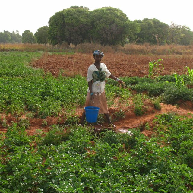 Why Malian women will do more agric: A success story in promoting women's land rights