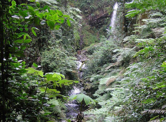 Lerne die Frau kennen, die mit Umuguanda für den Schutz der Umwelt in Ruanda kämpft