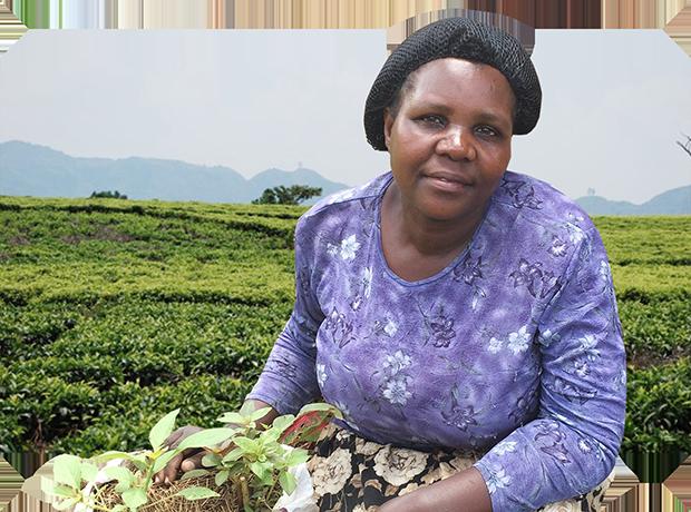 Die WeFarm-Community verbessert das Leben von Bauern weltweit