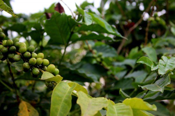 Nicht nur für Kaffeeliebhaber: Ziporas Unternehmen macht einen Unterschied