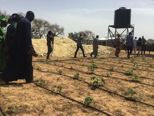 Was kann Technologie zu einer grüne Wende in Afrika beitragen?