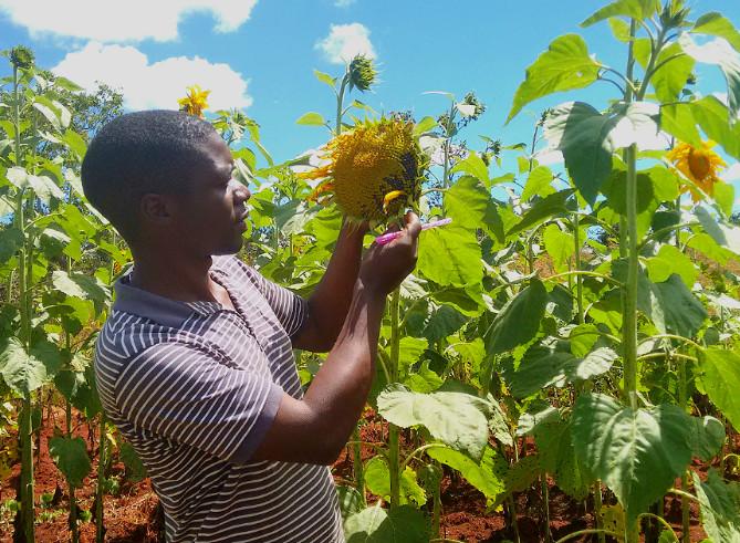Préserver l'environnement et nourrir la population