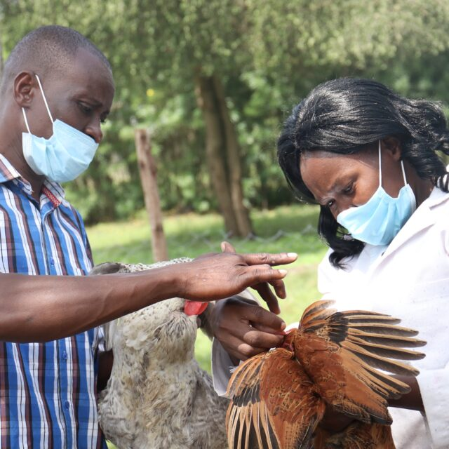 Hatching new plans: How a survivor of gender-based violence launched a thriving poultry business