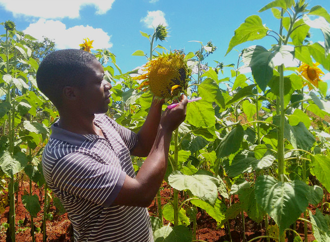 How a community is feeding its people by nurturing the land